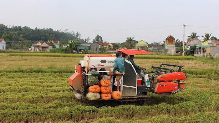 Bộ Nông nghiệp và phát triển nông thôn đánh giá, chính sách tạo thúc đẩy tích tụ, tập trung đất đai để sản xuất nông nghiệp hàng hóa tập trung, quy mô lớn chưa đủ mạnh