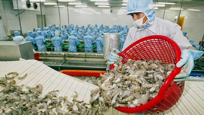 Thị phần tôm của Việt Nam tại Mỹ giảm 1,2%, xuống còn 6,8% trong 3 tháng đầu năm nay
