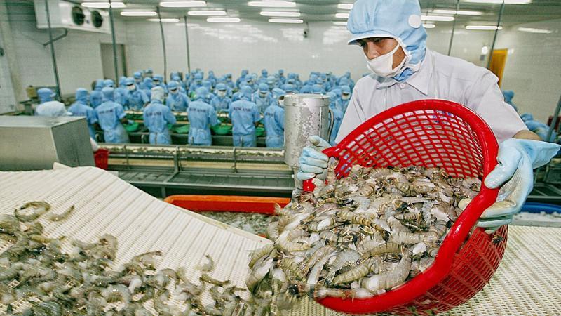 Việt Nam vẫn là nguồn cung tôm lớn nhất cho thị trường Canada, chiếm 30,3% thị phần.