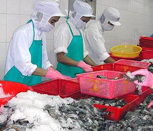 Lượng và kim ngạch xuất khẩu tôm của nước ta vào Trung Quốc, Hàn Quốc đều tăng khá mạnh trong tháng 1/2009.