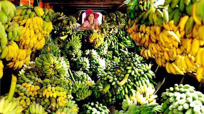 Xuất khẩu rau quả sang Trung Quốc trong 8 tháng đầu năm 2018 đạt gần 2 tỷ USD, tăng 11,6% về giá trị so với cùng kỳ năm 2017.
