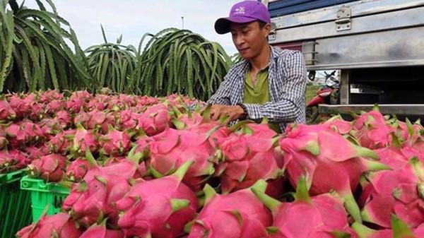 Xuất khẩu hoa quả sang Trung Quốc sẽ bị truy xuất nguồn gốc.