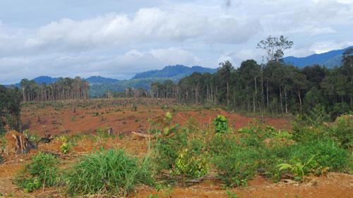 Theo Thứ trưởng Hà Công Tuấn, đến trung tuần tháng 10/2015, Bộ Nông nghiệp và Phát triển nông thôn sẽ có số liệu chính xác, đầy đủ về tình hình đất đai của các nông lâm trường.<br>