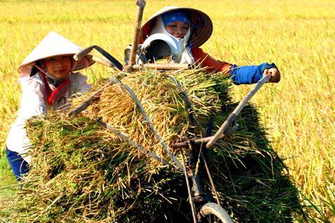 Nông nghiệp Việt Nam đang đứng trước thời điểm thách thức.