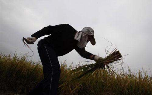 Theo thống kê từ Bộ Tài nguyên Trung Quốc, diện tích ruộng đất canh tác  nước này đã sụt giảm 6,2% trong giai đoạn từ năm 1997 đến năm 2008 - Ảnh: Reuters.<br>
