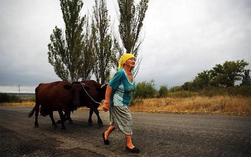 Một phụ nữ địa phương trên con đường ngoại ô thành phố Donetsk, miền Đông Ukraine ngày 9/9. Lệnh ngừng bắn ở miền Đông Ukraine đang được duy trì - Ảnh: Getty/WSJ.<br>