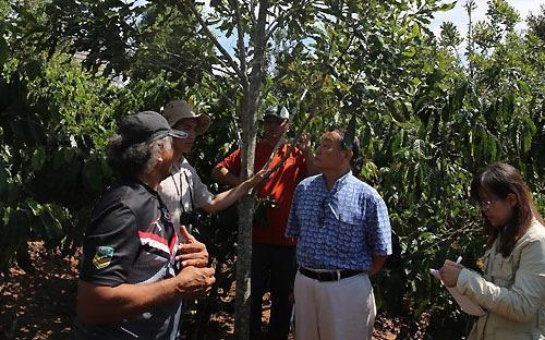 Đoàn chuyên gia thăm vườn mắc-ca 5 năm tuổi, trồng xen với cà phê và sầu riêng tại xã Ninh Trường (Đức Trọng, Lâm Đồng) - Ảnh: Việt Hưng.<br>