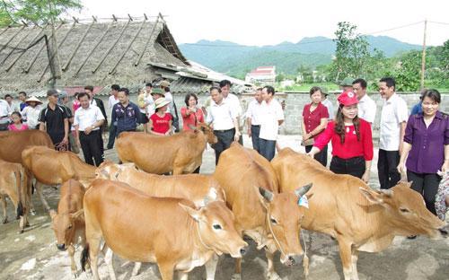 """Với phương châm """"Trao cần câu, thay vì cho con cá"""", FrieslandCampina  Việt Nam trao tặng mỗi hộ gia đình nghèo tham gia dự án """"Ngân hàng Bò"""" 1  con bò sinh sản trị giá 10 triệu đồng."""