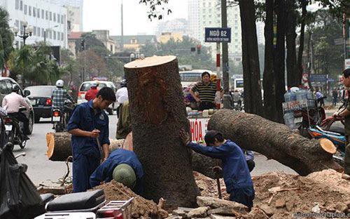 Thanh tra Hà Nội kiến nghị nghiêm túc kiểm điểm trách nhiệm của lãnh đạo UBND thành phố do thiếu  kiểm tra, sâu sát trong công tác chỉ đạo, triển khai thực hiện việc cải  tạo, thay thế cây xanh trong thời gian vừa qua.