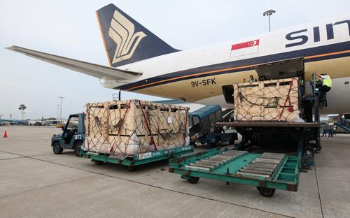 Chi phí khá cao, nhưng Vinamilk chọn vận chuyển bò sữa bằng máy bay nhằm đảm bảo được độ an toàn cũng như sức khỏe cho đàn bò.