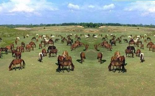 Đến Trung tâm Nghiên cứu và phát triển chăn nuôi miền núi (ở thị xã Sông  Công - Thái Nguyên), trên những thảo nguyên xanh ngút ngàn, trên triền  đồi là hàng trăm con ngựa đang thong thả gặm cỏ.