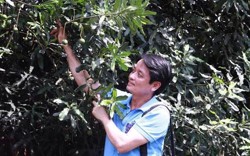 Ông Nguyễn Đức Hưởng tại một vườn mắc-ca tại Quảng Tây, Trung Quốc.<br>