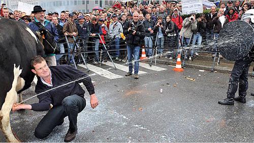 Trong cơn tuyệt vọng khi giá sữa giảm quá sâu, nông dân mang cả bò sữa đi biểu tình và phun sữa vào mặt cảnh sát cũng như vắt sữa trắng đường - Ảnh: New York Times.<br>