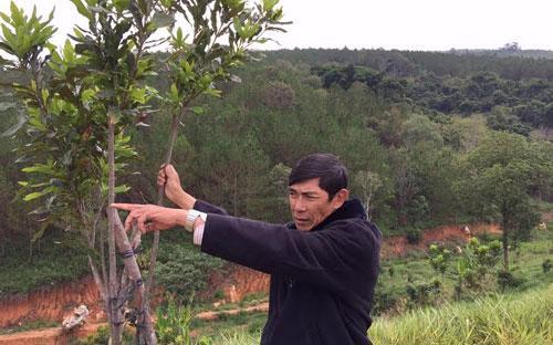 Ông Trần Vinh bên vườn mắc-ca của mình tại xã Tà Lũng (Đà Lạt).<br>