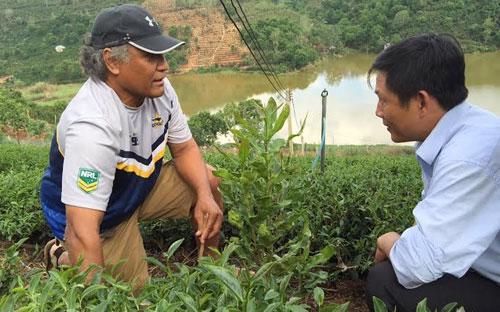 Ông Arona L Palamo, chuyên gia của đoàn khảo sát, tìm hiểu mô hình mắc-ca trồng xen trong vườn chè ô long ở Xuân Trường, thành phố Đà Lạt.