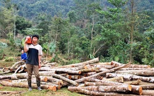 Theo thống kê, Việt Nam hiện có hơn 13 triệu ha rừng.