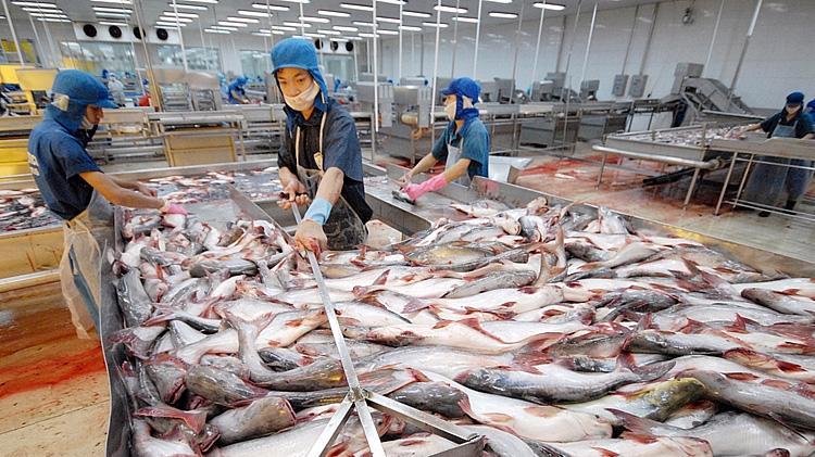 Giá trị xuất khẩu thủy sản tăng tại nhiều thị trường.
