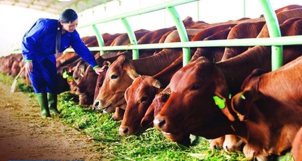 Chuyển đổi số trong ngành chăn nuôi