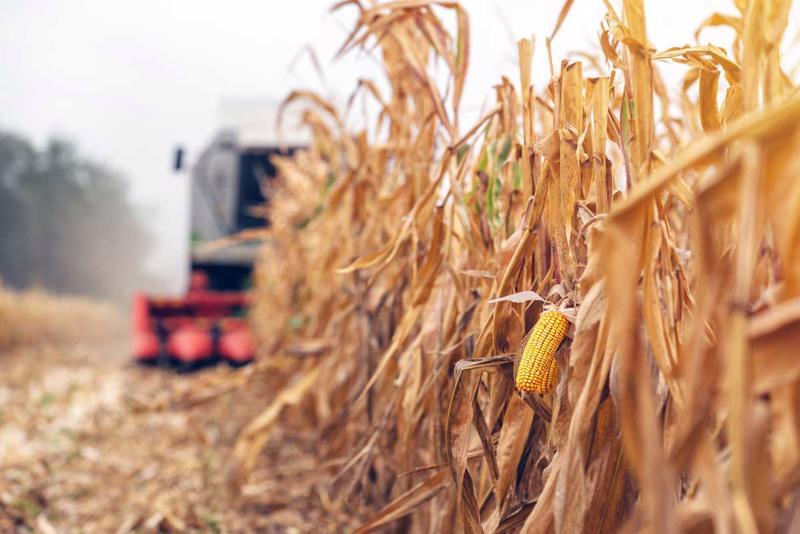 Giá lương thực toàn cầu dự kiến sẽ tiếp tục tăng do triển vọng mùa vụ năm 2021 bị ảnh hưởng do thời tiết bất lợi.