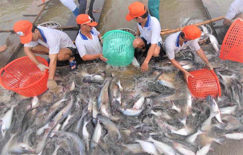 Xuất khẩu cá tra đang dẫn tăng trưởng trở lại