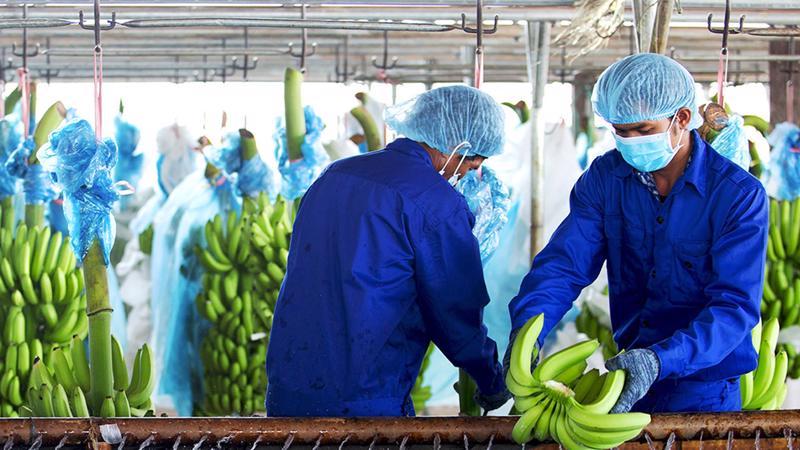 Doanh thu trái cây giảm 577 tỷ từ 692 tỷ còn 115 tỷ đồng do tập đoàn không còn hợp nhất doanh thu từ CTCP Nông nghiệp Quốc tế Hoàng Anh Gia Lai (HNG) và Nhóm các công ty con từ HNG.