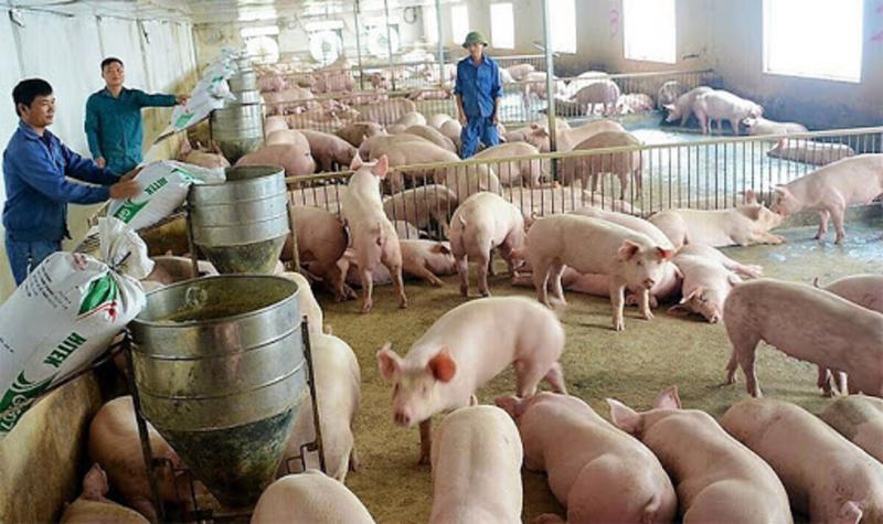 Nhu cầu tiêu thụ thịt lợn của Campuchia vào khoảng 7.000 - 8000 con/ngày.