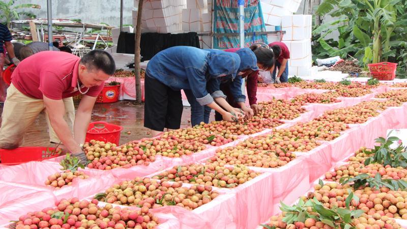Hỗ trợ tiêu thụ nông sản của địa phương bị ảnh hưởng bởi dịch Covid-19 trên nền tảng số.