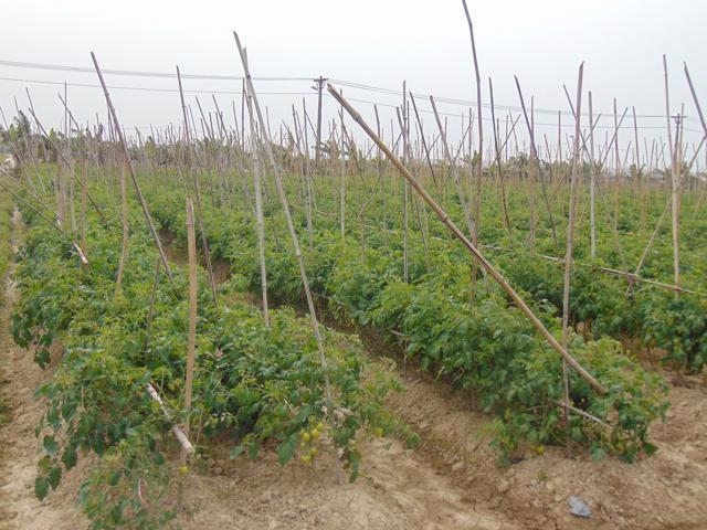 Trang trại nông sản củaHợp tác xã Dịch vụ Nông nghiệp chất lượng cao Hoa Phong - một trong 10 doanh nghiệp được thẩm định.