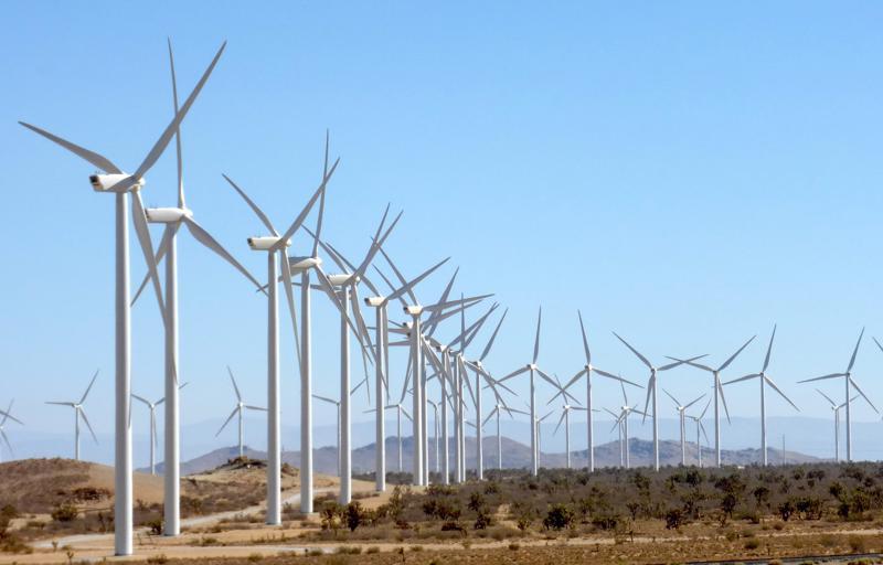 Thu hồi hơn 10ha đất rừng để tiếp tục thực hiện dự án trang trại điện gió lớn nhất nước