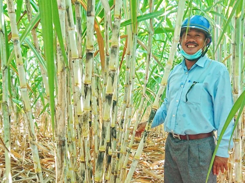 Nông dân trồng mía vui mừng vì giá mía tăng