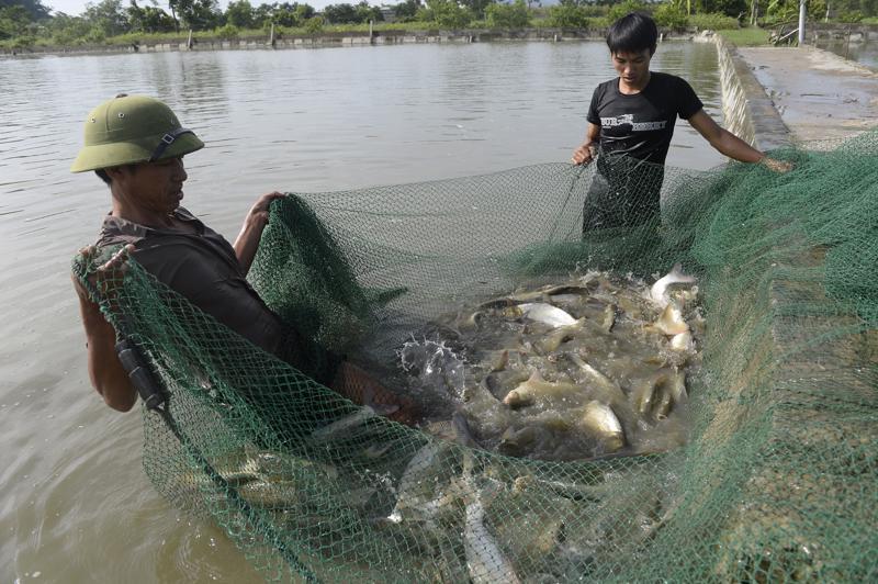 Tạo môi trường phát triển thủy sản bền vững là một trong những mục tiêu các dự án do FAO thực hiện.