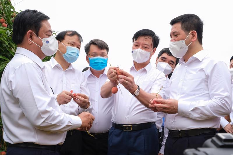 Lãnh đạo tỉnh Hải Dương, Bộ Công Thương, Bộ Nông nghiệp và Phát triển nông thôn thăm vườn vải thiều xuất khẩu tại thôn Thanh Lanh, xã Thanh Quang, huyện Thanh Hà, tỉnh Hải Dương.