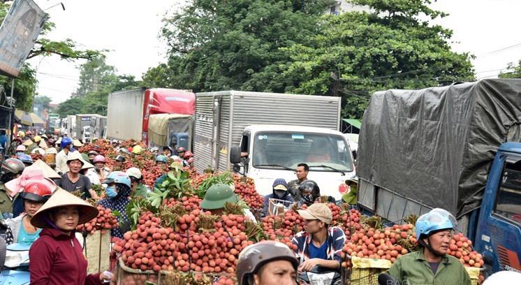Quốc lộ 31 là tuyến giao thông huyết mạch, đóng vai trò quan trọng trong việc lưu thông vận chuyển vải thiều huyện Lục Ngạn