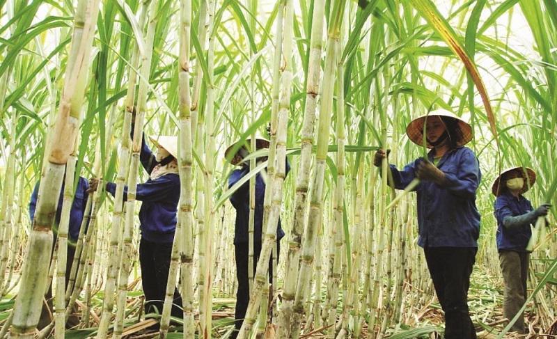Các doanh nghiệp nộp hồ sơ miễn trừ biện pháp chống bán phá giá đối với đường mía Thái Lan trước ngày 25/7/2021.