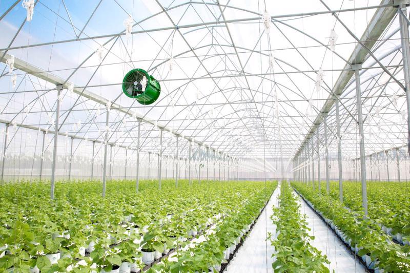 Bên trong nhà kính ứng dụng nông nghiệp công nghệ cao của Tập đoàn PAN