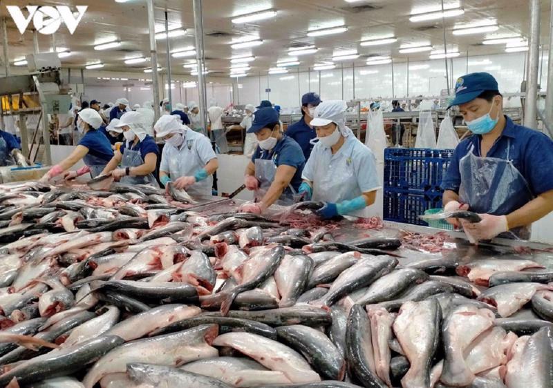 Cá tra phi-lê Việt Nam chiếm 99,38% thị phần tại Đài Loan