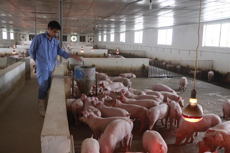 Ngành chăn nuôi nhiều tiềm năng về năng lượng sinh khối.