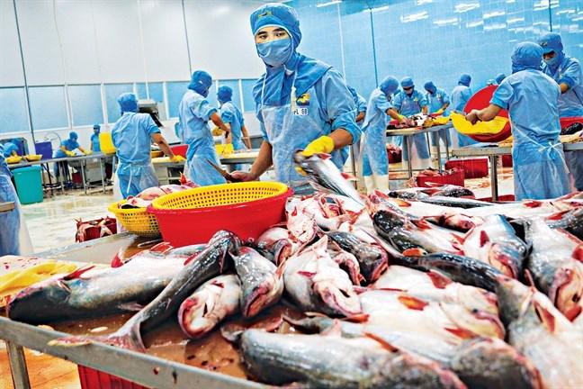 Lao động ngành thủy sản cần được ưu tiên tiêm vaccine sớm.