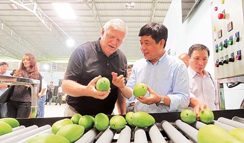Sau 10 năm đàm phán, tháng 2/2019 xoài Việt Nam chính thức được phép xuất khẩu sang Hoa Kỳ.