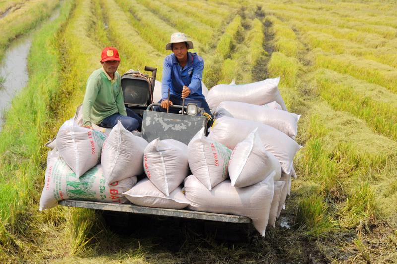 Ngân hàng nhà nước yêu cầu các ngân hàng mở hạn mức tín dụng cho kinh doanh thóc gạo