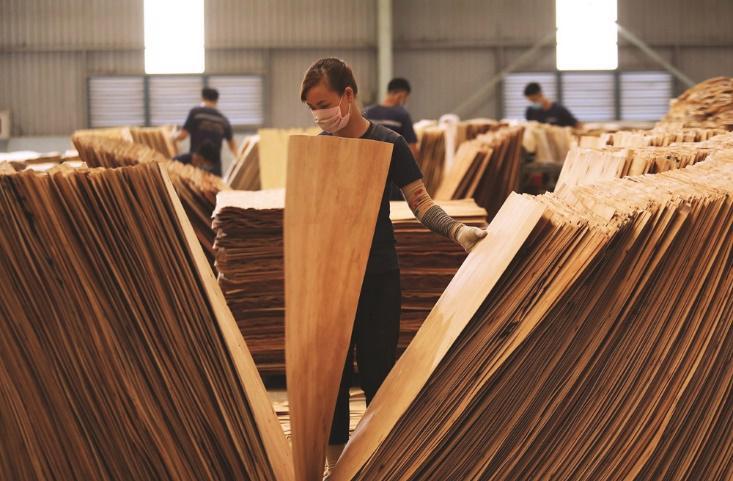 Mặt hàng gỗ dán từ nguyên liệu gỗ cứng xuất khẩu sang Hoa Kỳ có nguy cơ bị áp dụng các biện pháp phòng vệ thương mại