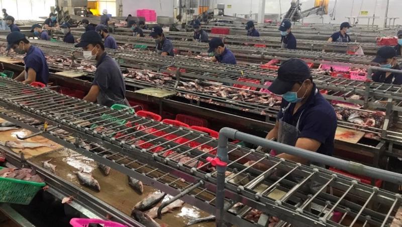Lượng công nhân làm việc tại nhà máy chế biến được duy trì ở mức 35-45%.