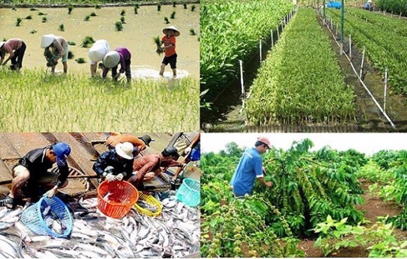 Sản xuất nông nghiệp vượt qua khó khăn.
