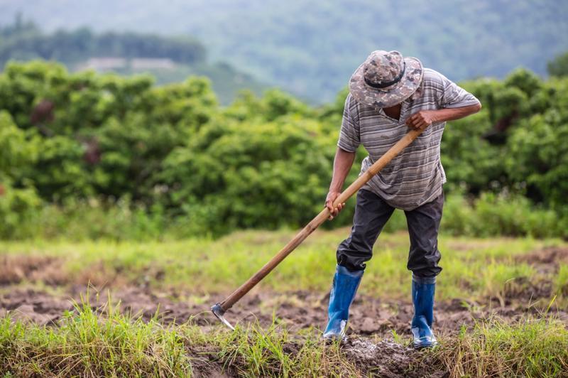 Nông dân Đông Nam Á đối mặt với ngày càng nhiều những thách thức