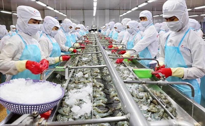 Chế biến thủy sản thu hẹp do thiếu lao động.