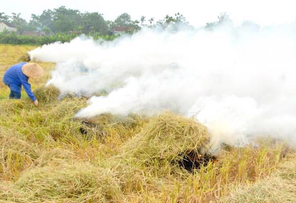 Đốt rơm rạ vừa lãng phí vừa gây ô nhiễm môi trường.