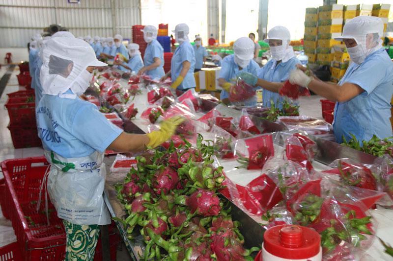 Xuất khẩu thanh long suy giảm do Trung Quốc ngừng nhập tại một số cửa khẩu.