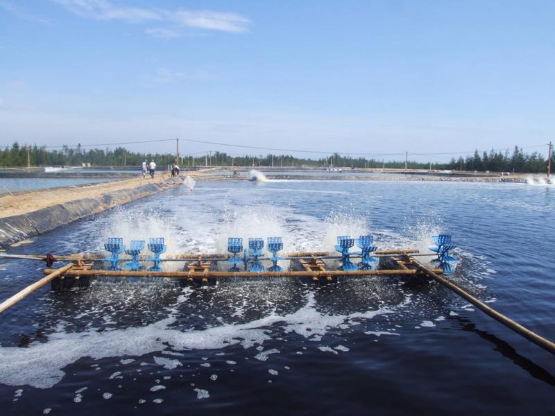 Miễn phí thẩm định đề án xả nước thải vào nguồn nước, công trình thủy lợi đối với hoạt động nuôi trồng thủy sản - Ảnh minh hoạ.