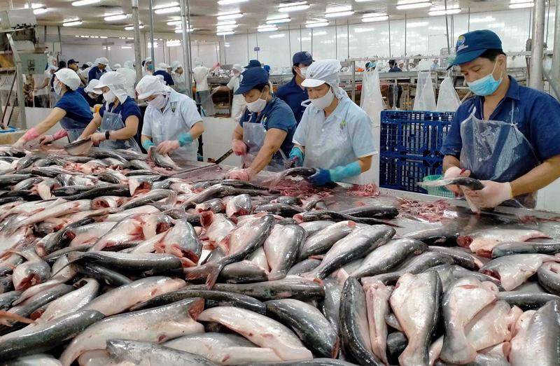 Ngành cá tra lao đao trong đại dịch Covid-19.