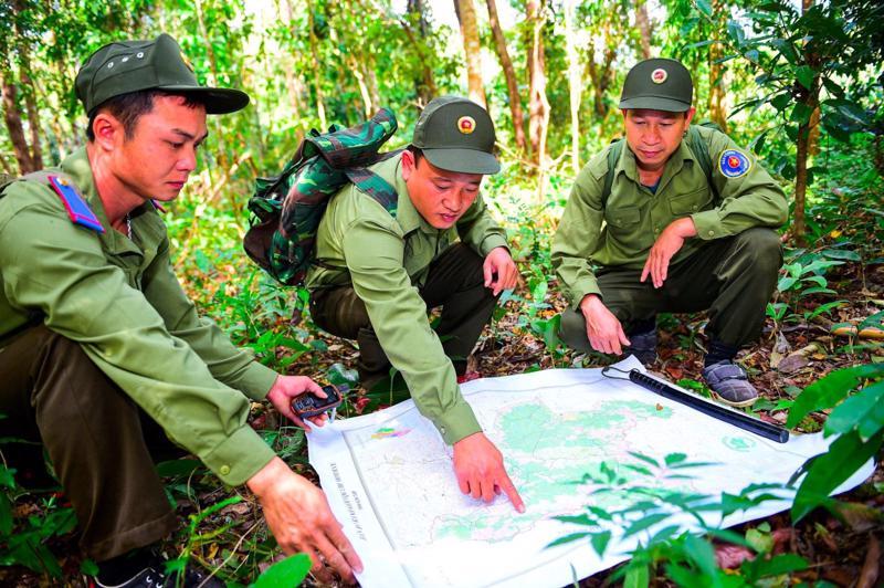 Tăng cường công tác bảo vệ rừng.